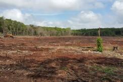 Venta  143 hectáreas poblado de hi  chek ,Campeche
