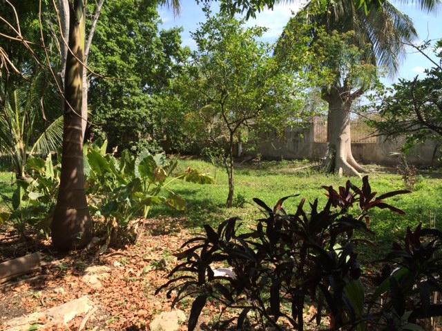 Terreno en venta IMI I cerca  de Av. Benito Juarez